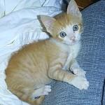Garfield 6 Wks